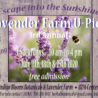 3rd Annual Indigo Blooms Lavender Farm U-Pick 2020